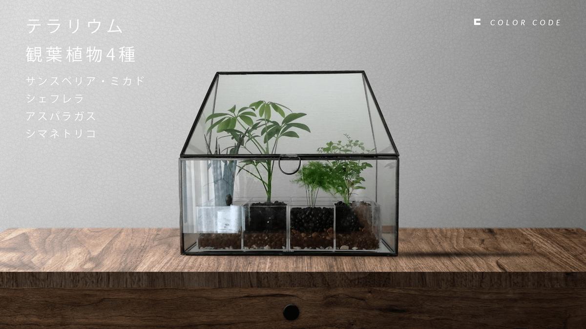観葉植物 | テラリウム(植物4種)